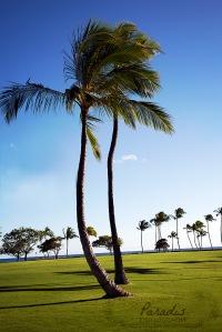 Palms-copy