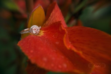 portsmouth wedding photographer, maine wedding photographer, maine, new hampshire, new england, engagement photo session, love, couples, engagement ring