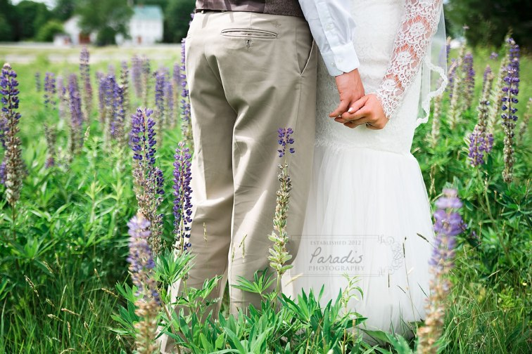 Among the lupines | Paradis Photography | Coolidge Family Farm